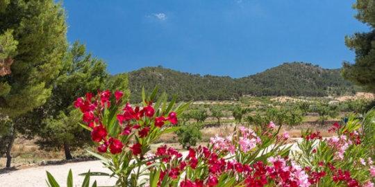 Uitzicht op de omgeving van de Rancho